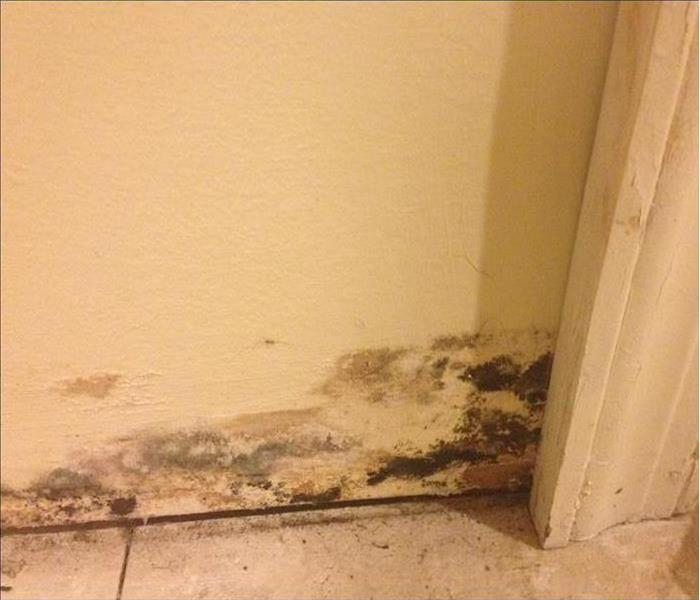 Mold Patches in a Tallahassee Home Before