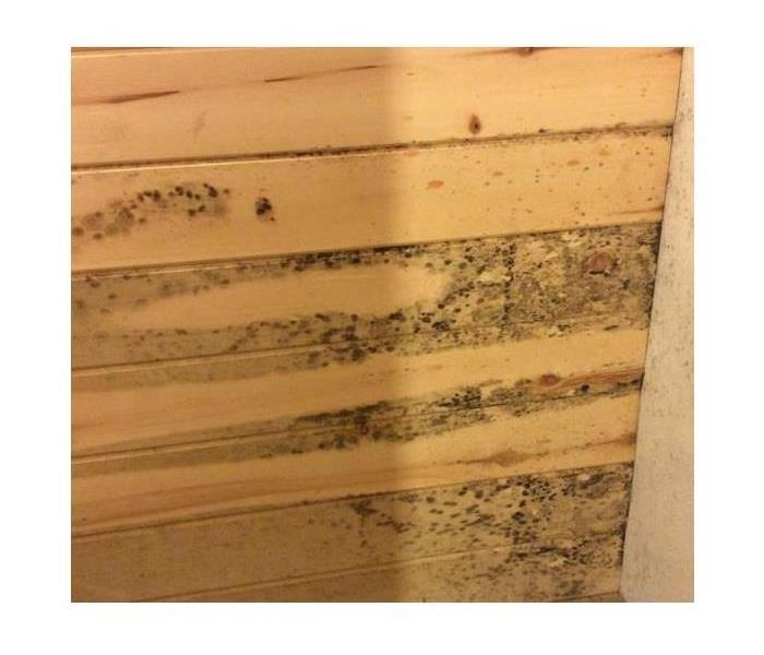 FSU Area Mold Remediation