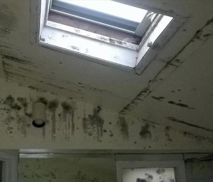 Tallahassee Mold Remediation Needed