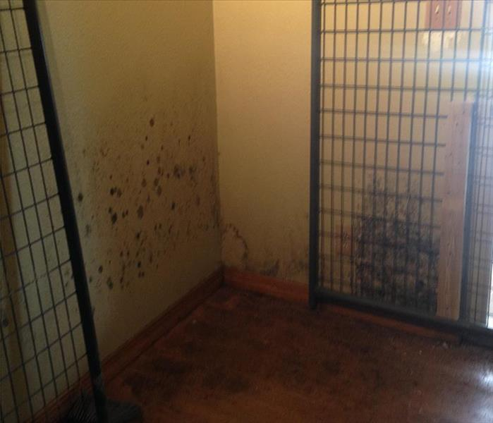 FSU Storm and Mold Damaged Property