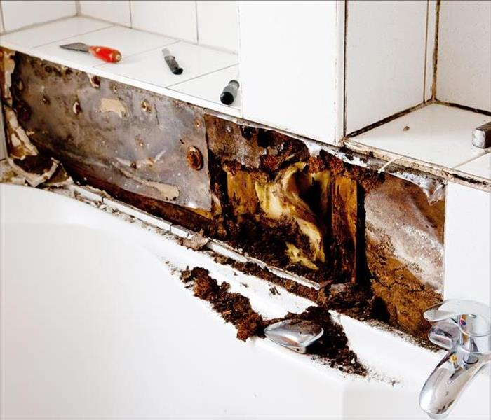 Mold Remediation Mold Damage in Area Homes and Housing Units