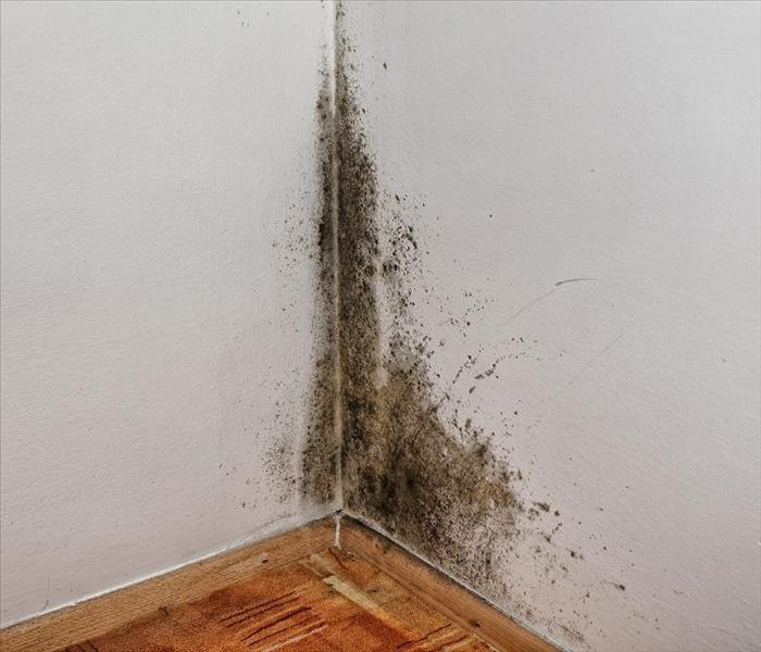 Commercial Mold Damage in Your Secondhand Shop in Tallahassee